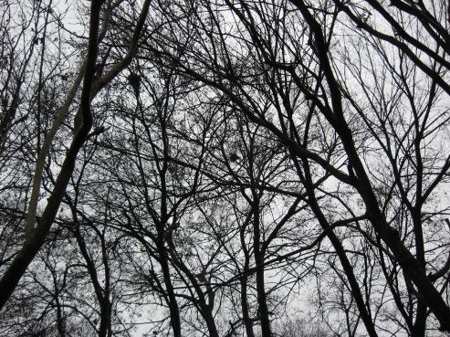 treesbeardecember2016gartland