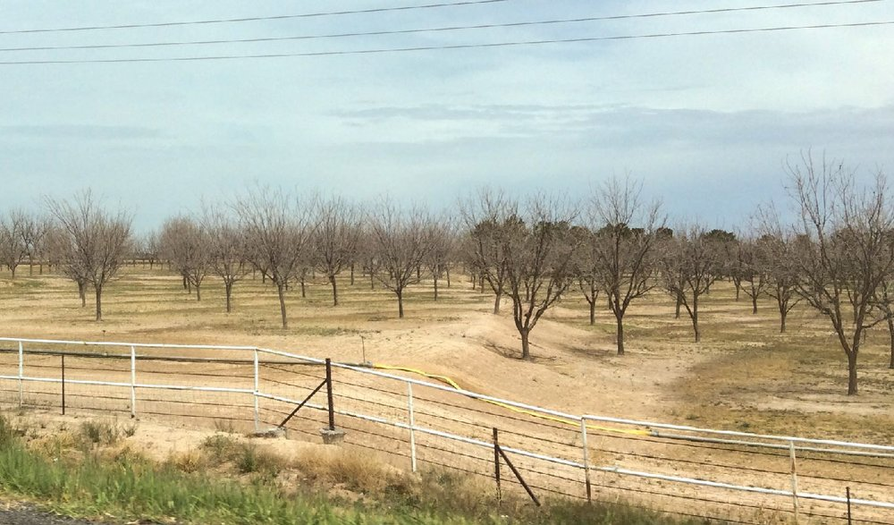 The Pecan Groves in New Mexico April 6, 2018